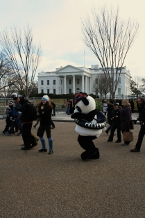 Panda Bear at The White House